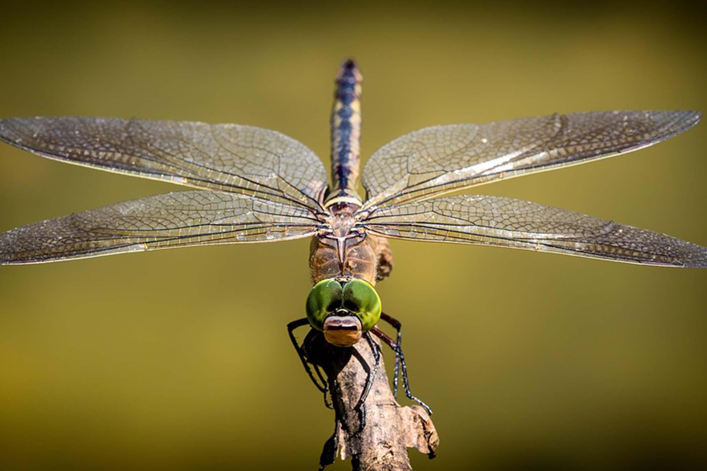 Hybrid Pest Control Tulsa